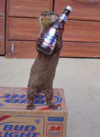otter-beer.jpg